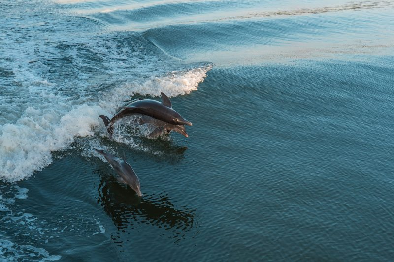 Dolphin and Wildlife Captiva Cruises
